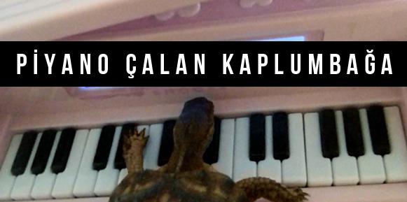 Bakın Kaplumbağa Piyanoyla Ne Çaldı